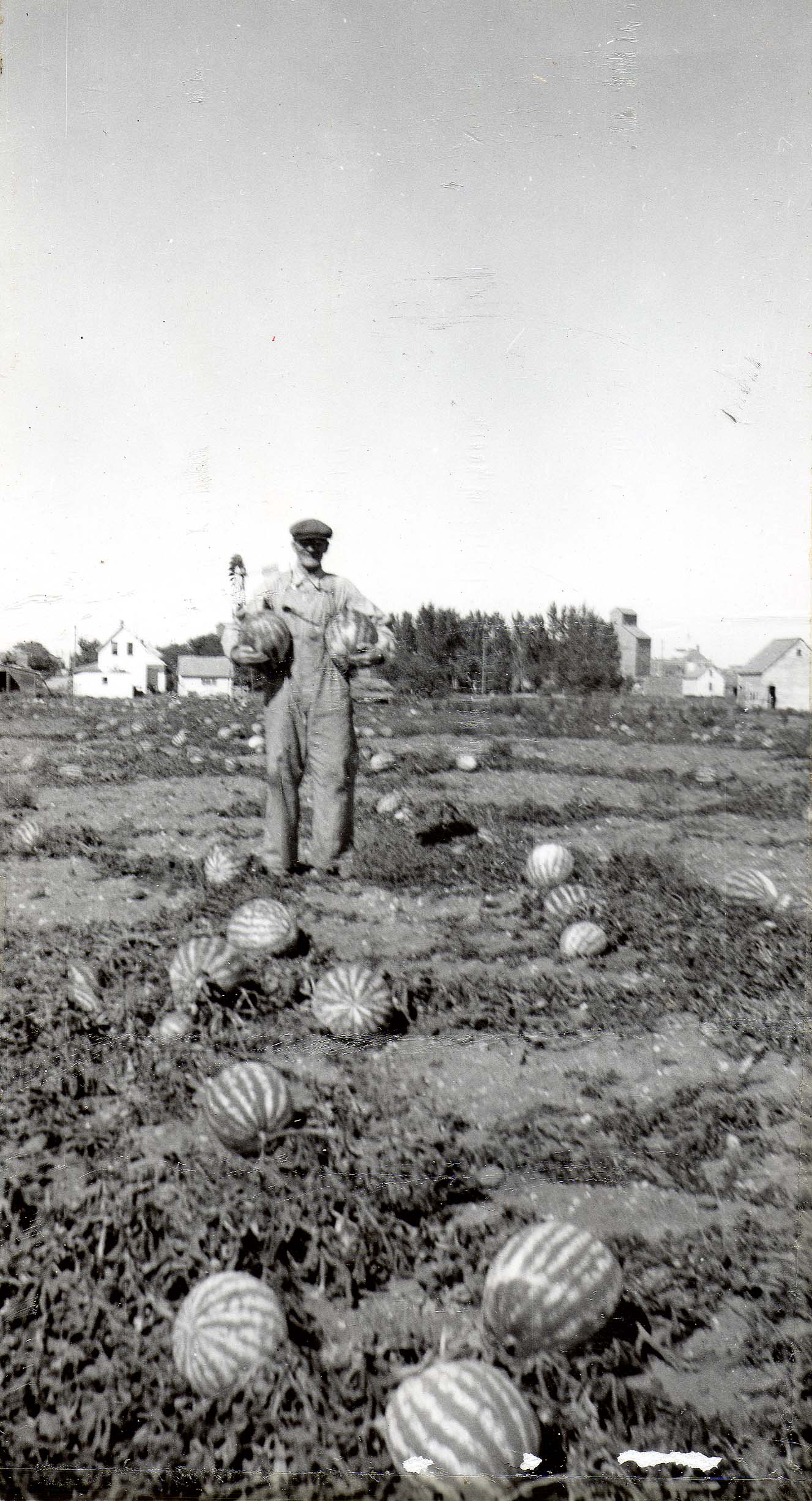 North dakota logan county fredonia - 11 Regner Family Eats Melons Every Year